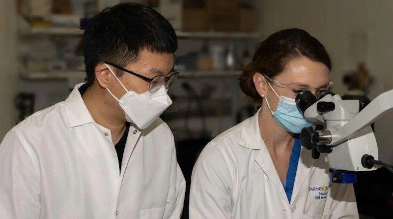 """A new study from Washington University School of Medicine in St. Louis shows that a type of """"good cholesterol"""" called HDL3, when produced in the intestine, protects the liver from inflammation and injury. First author Yong-Hyun Han, PhD, (left) and co-author and Washington University surgical resident Emily Onufer, MD, work in the surgical suite where the mouse surgeries were conducted as part of this study. Han did this work while a postdoctoral researcher in the lab of senior author Gwendalyn Randolph, PhD. CREDIT: Brad W. Warner"""