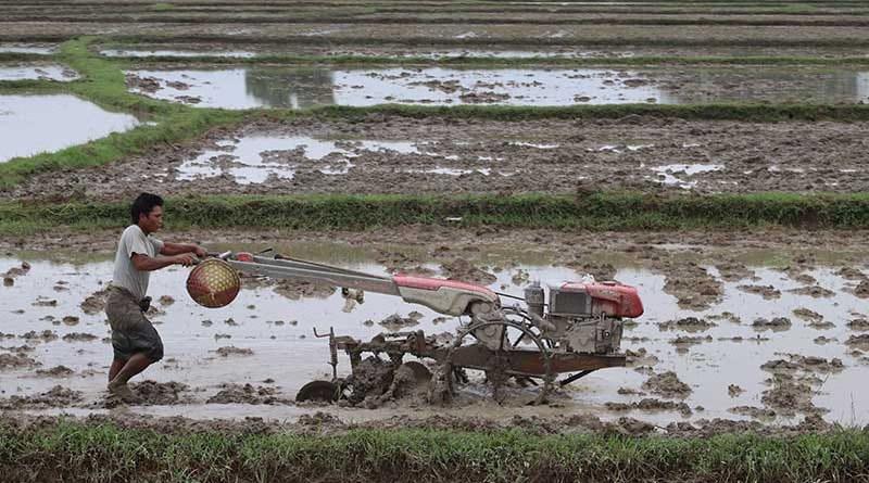 A farmer in Arakan State, Myanmar. Photo Credit: DMG