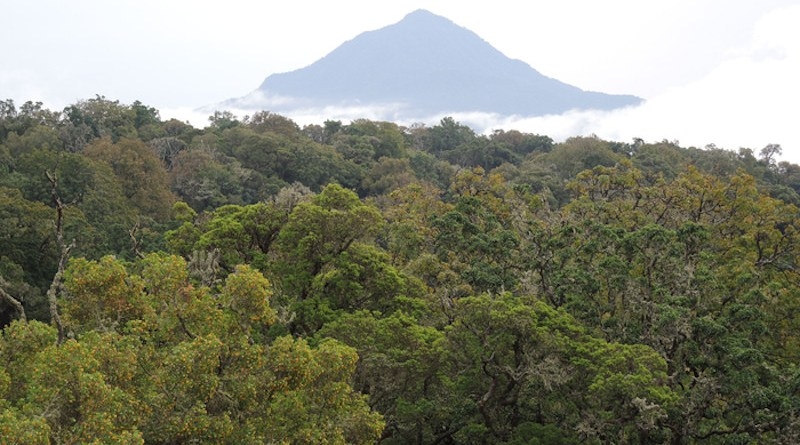 Montane forest in Cameroon CREDIT: Jiri Dolezal