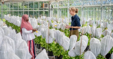 Prof. Brigitte Poppenberger (r.) and her doctoral student, Adebimpe Adedeji-Badmus, surrounded by Ebolo plants in a greenhouse of the TUM School of Life Sciences. CREDIT: A. Heddergott / TUM