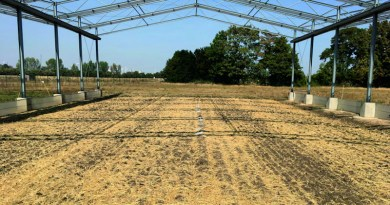GCEF experimental plot (conventional farming). PBSA samples were placed in the middle of the plot. CREDIT: ©Purahong, UFZ