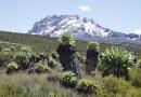 Ecosystem with alpine vegetation at Mount Kilimanjaro. CREDIT: Andreas Hemp