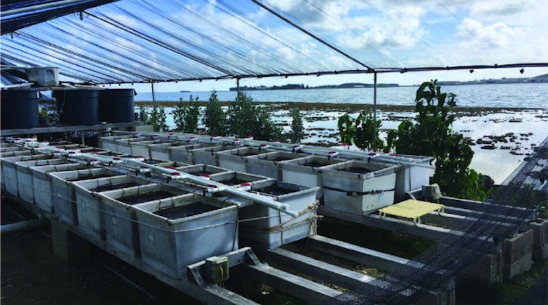 Experimental set-up of mesocosms at the Hawaii Institute of Marine Biology. CREDIT: Chris Jury, HIMB