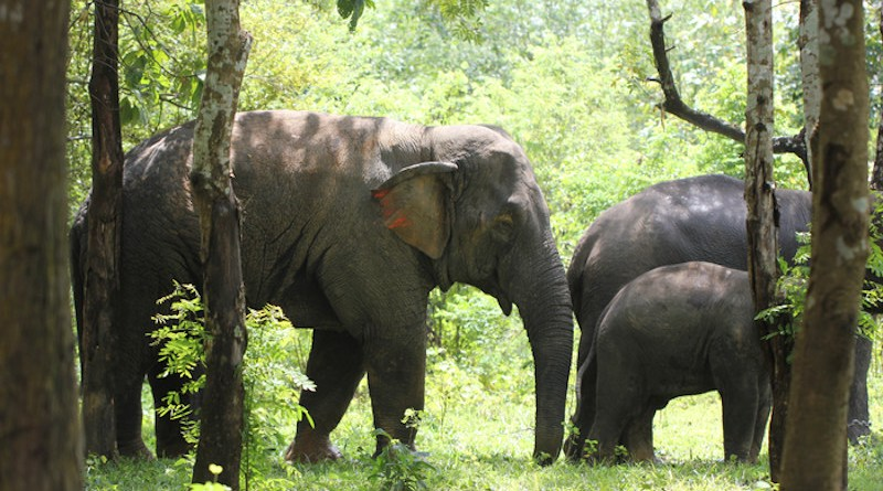 Elephants in the Myaing Hay Wun elephant camp, Myanmar CREDIT: Li-Li Li, Li L-L et al., PLOS Biology, CC-BY 4.0 (https://creativecommons.org/licenses/by/4.0/)