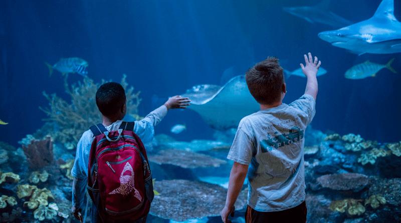 Visitors enjoy an exhibit at Chicago's Shedd Aquarium. CREDIT: Shedd Aquarium/Brenna Hernandez