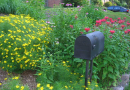 A USDA Forest Service scientist was part of a team that explored the value of the biggest chunk of green space found in cities - residential yards - as wildlife habitat. Photo shows coreopsis, bee balm, and purple coneflower near a residential mailbox. CREDIT: Photo by David Mizejewski, National Wildlife Federation.