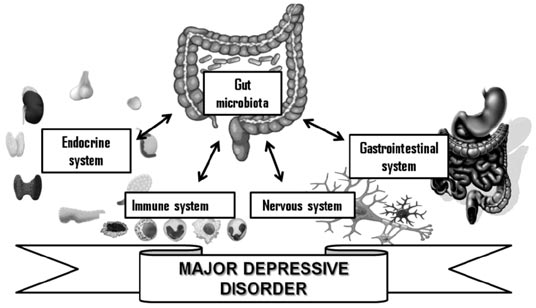Probiotics as an Adjuvant Therapy in Major Depressive