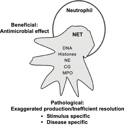 Neutrophil Extracellular Traps as a Drug Target to