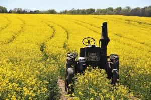 Photographie d'un champ de colza avec un tracteur