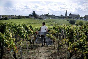 Photographie de rangs de vigne