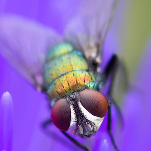 Eye Fly by Dave Kemp