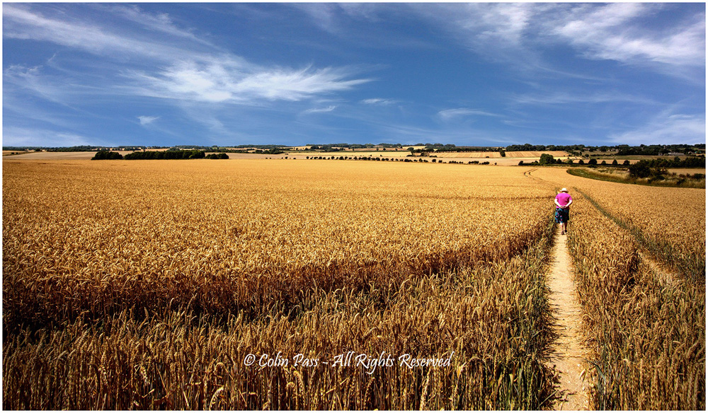 Fields of gold by Colin Pass