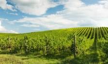 Agroalimentare: IRIDE e le nuove opportunità di investimento