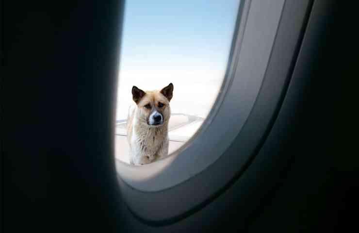 como levar cachorro no aviao