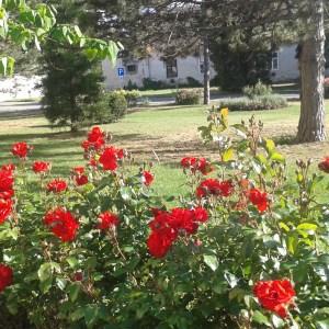 Sopron legszebb rózsakertje