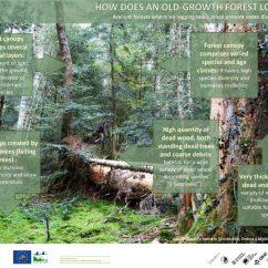 Forest Canopy Diagram Gmc Yukon Radio Wiring News Europarc Federation
