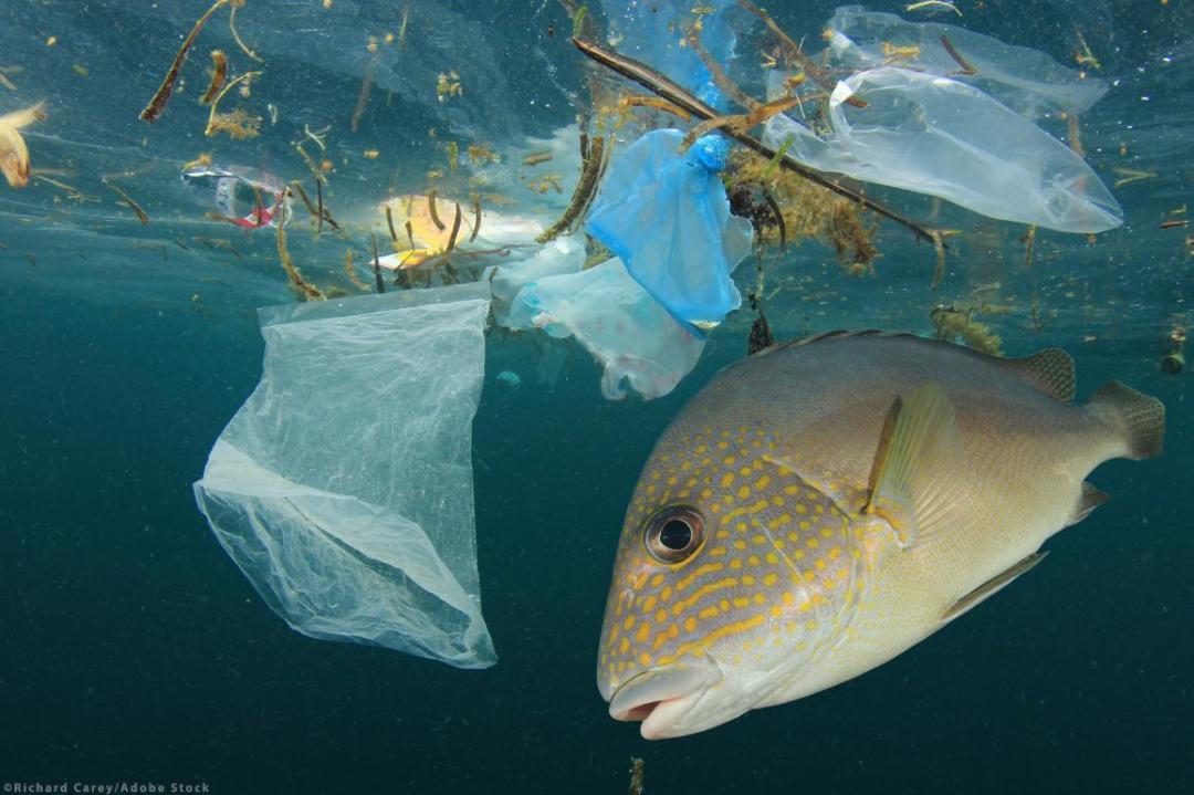 Plastics contaminate seafood. ©AdobeStock/Richard Carey