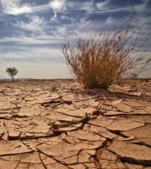 onu agriculture climat