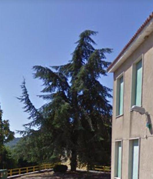 A Castelnuovo si tagliano alberi sani