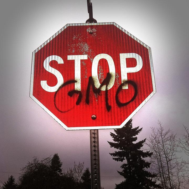 European Consumers continua la lotta contro l'apertura governativa agli OGM inviando alle Autorità nuovi documenti integrativi