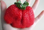 Would you eat this Strawberry?