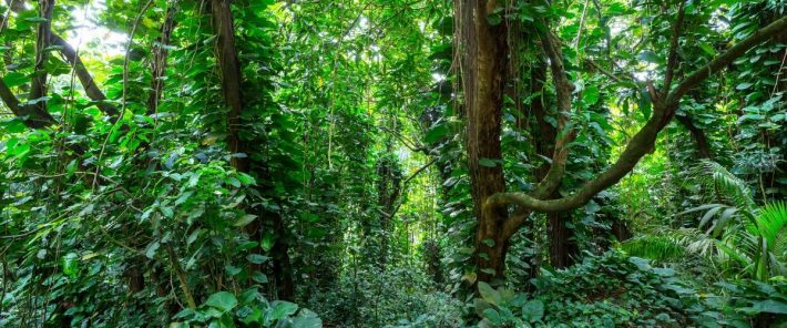 Plant extinctions are occurring at an alarming rate, according to a comprehensive global survey
