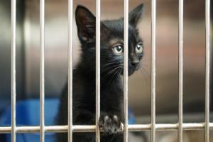 5 Benefits of Adopting a Pet as an Expat
