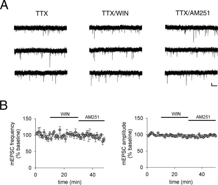 Mechanisms for synapse specificity during striatal long