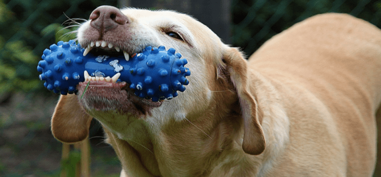 Tips for Finding and Purchasing Chewers for Your Dog