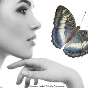 Euthalia-voordeel pakket Formosana