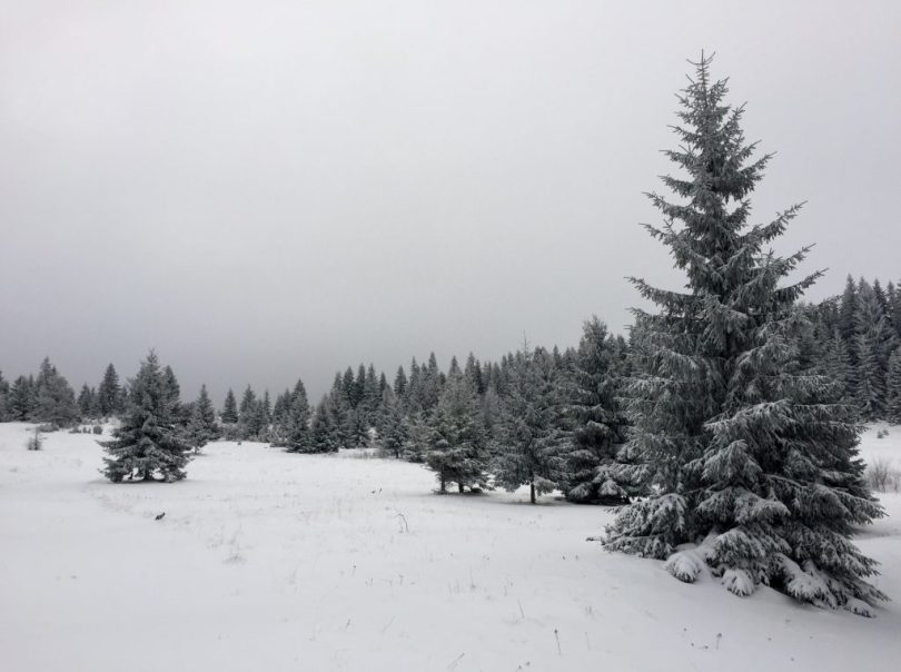 Hiking_from_vukov_konak_to_crepoljsko_bosnia_herzegovina_via_dinarica_green_trail_in_the_snow