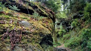 Mullerthal_trail_Luxembourg