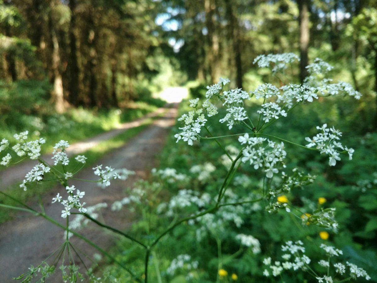 Witte_bloemen
