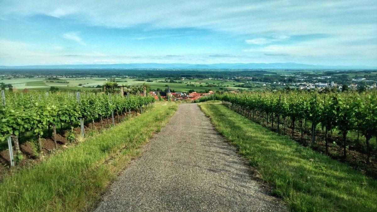 Wijnstrase