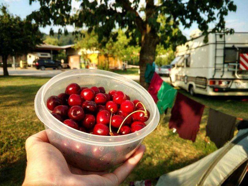 Mammern_Bodensee_cherrytree