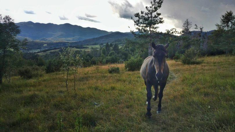 Hello_paardje_wandelen_nanos_slovenie