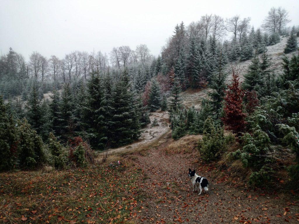 Perun_planina