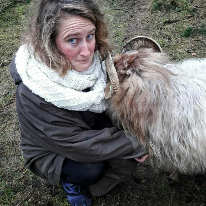 Hiking with sheep