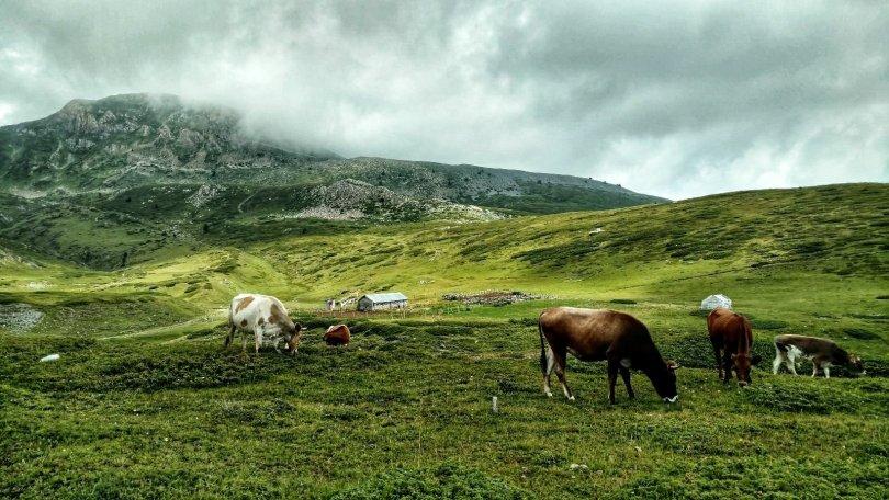 Junik mountains, Kosovo