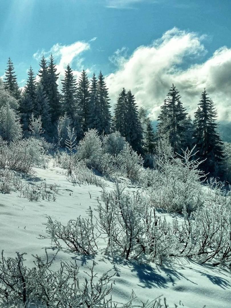 Trebević Tales, Pines & Snow
