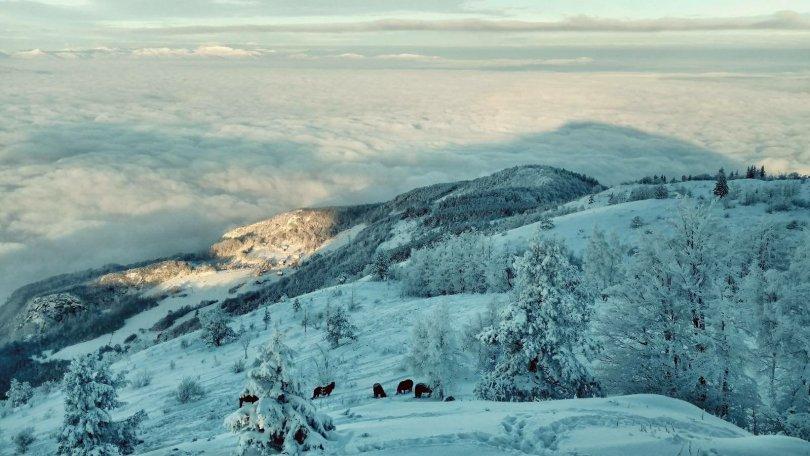 Wild horses on Trebević