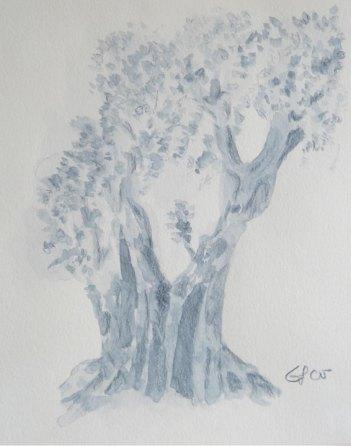 Olivenbaumstudie, 2005, mit Passepartout und Rahmen, 40 x 50 cm