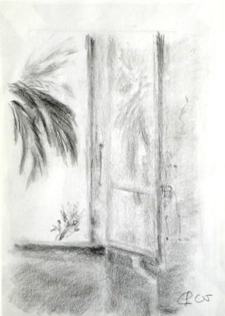 Palme, 2005, mit Passepartout und Rahmen, 30 x 40 cm, Bleistift