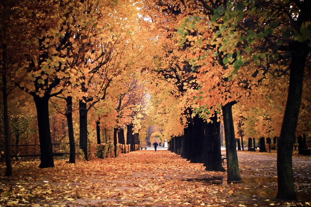 Vienna - Austria - Autumn run