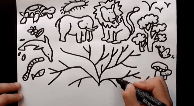 evoluzione matematica