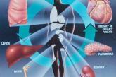 El Gaudium pública: Donación de órganos: la pregunta: ¿Cuestión de cultura?