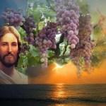Evangelio San Juan 15,1-8. Miércoles 17 de Mayo de 2017.