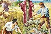 Evangelio San Mateo 13,24-30. Sábado 24 de Julio de 2021. Misa de Santa María Virgen.