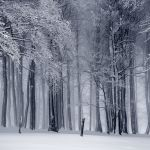 woods covered in snow