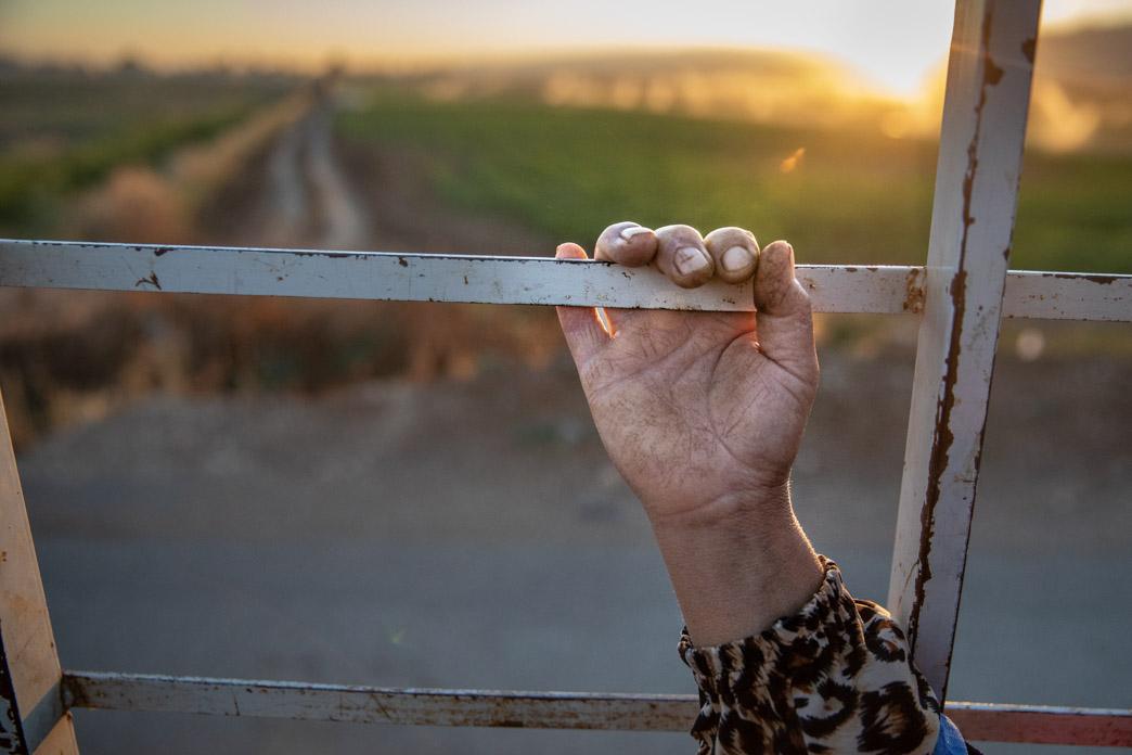 Una jornalera siria cobra por media jornada 4$. Trabajan al día entre 10 y 14 horas. Según un estudio de la Organización Internacional del Trabajo realizado en 2019, un refugiado sirio cobra un 40% del salario de un libanés. Una refugiada siria cobra un 40% del salario que cobran sus colegas sirios.